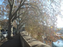 Along the Tevere