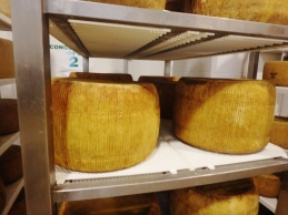 Aging wheels of pecorino at the Tumarrano dairy.