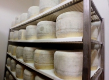 Forms of pecorino aging at the caseificio. Yes, that's mold and yes, it's a good thing.