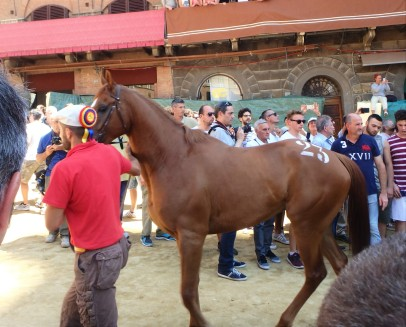 The Palio horse assignment.