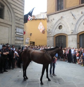 Heading to the Piazza for the Friday evening trial run. The contrada members and officers of the contrada, and the jockey follow, chanting and singing all the way into the Piazza.