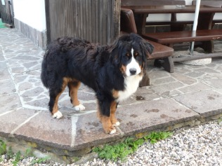 Tino, one of my new friends at the rifugio.