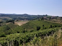 The lush countryside of the Langhe