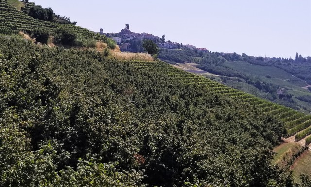 In the Barolo zone