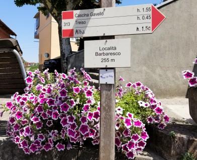 Entering the town of Barbaresco